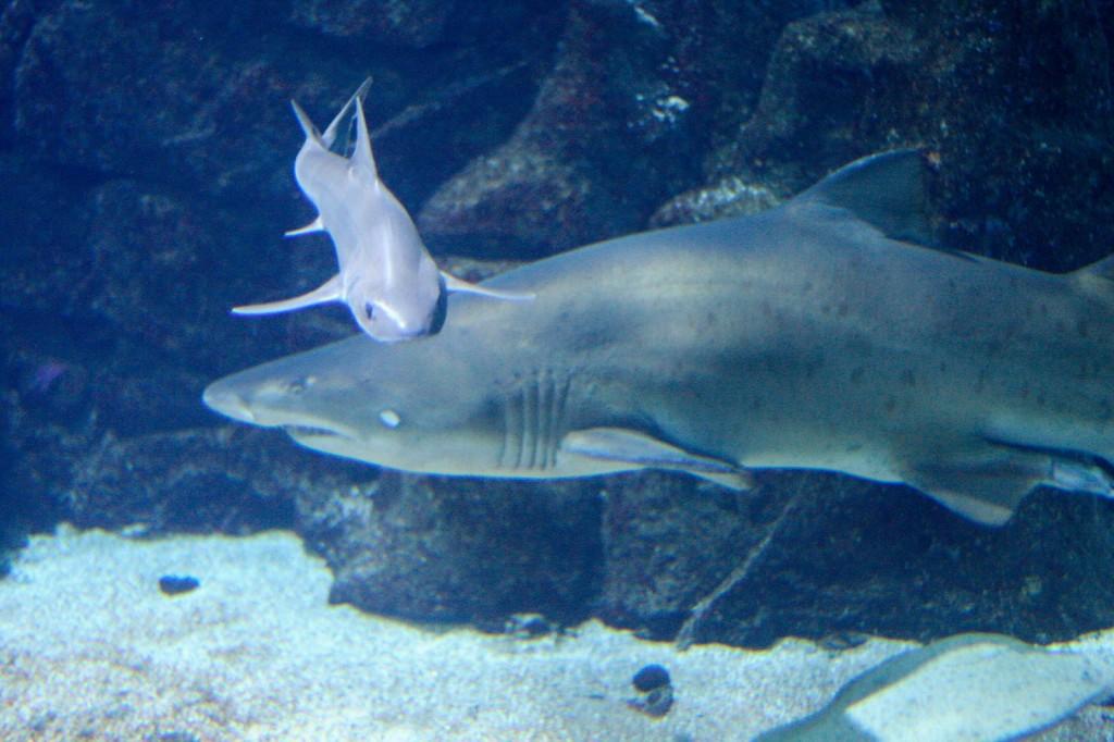 Aquarium finisterrae for Cria de peces en casa