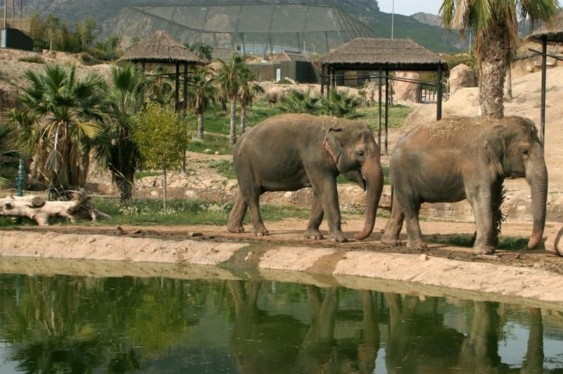 terra natura elefantes