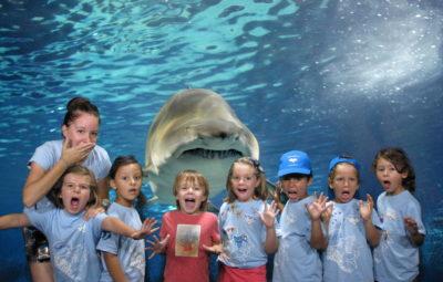 Niños asustando Oceanogràfic