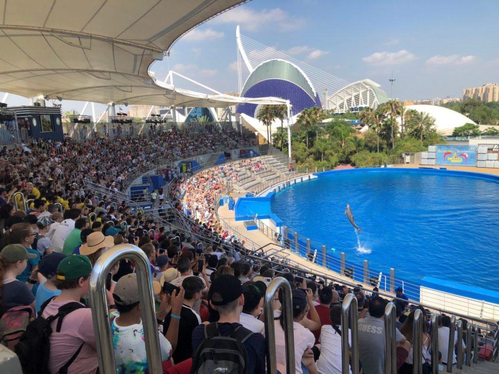 piscina de delfines oceanográfico