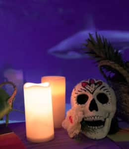 halloween oceanografic