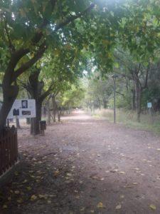 Senda Botánica de Calduch en Villarreal