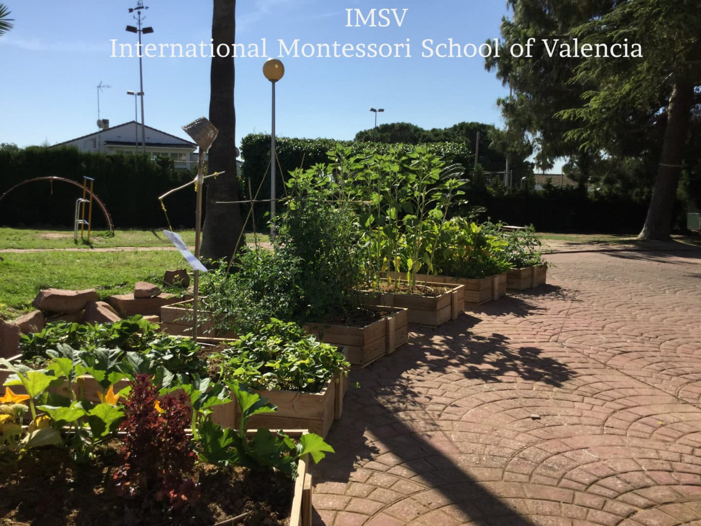 International Montessori School,