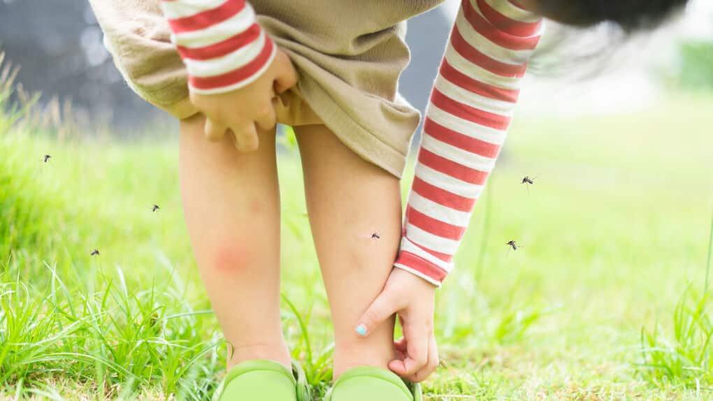 Fórmulas naturales para ahuyentar los mosquitos